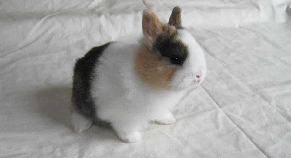 bebes lapins japonais